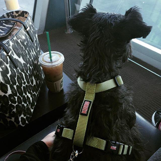 Sydney Travel Buddy